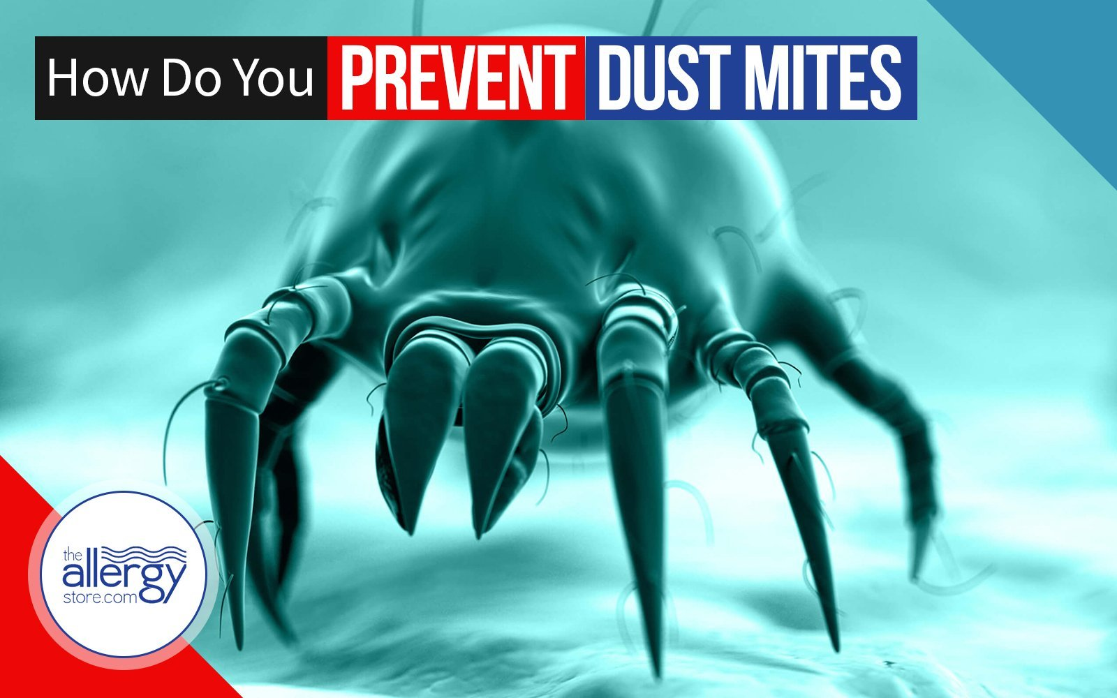 How Do You Prevent Dust Mites