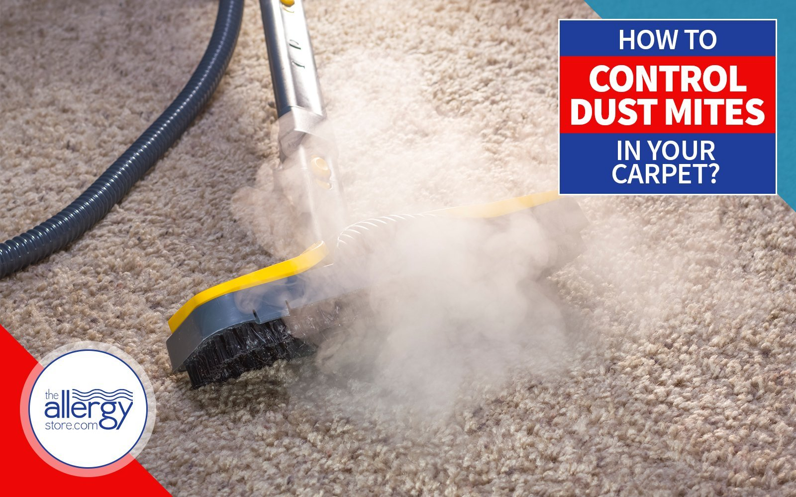 Best way to control dust mites in your carpeting