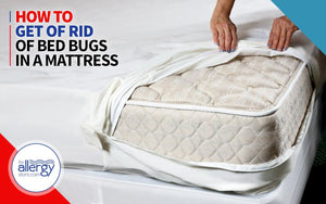 How to Get of Rid of Bed Bugs in a Mattress