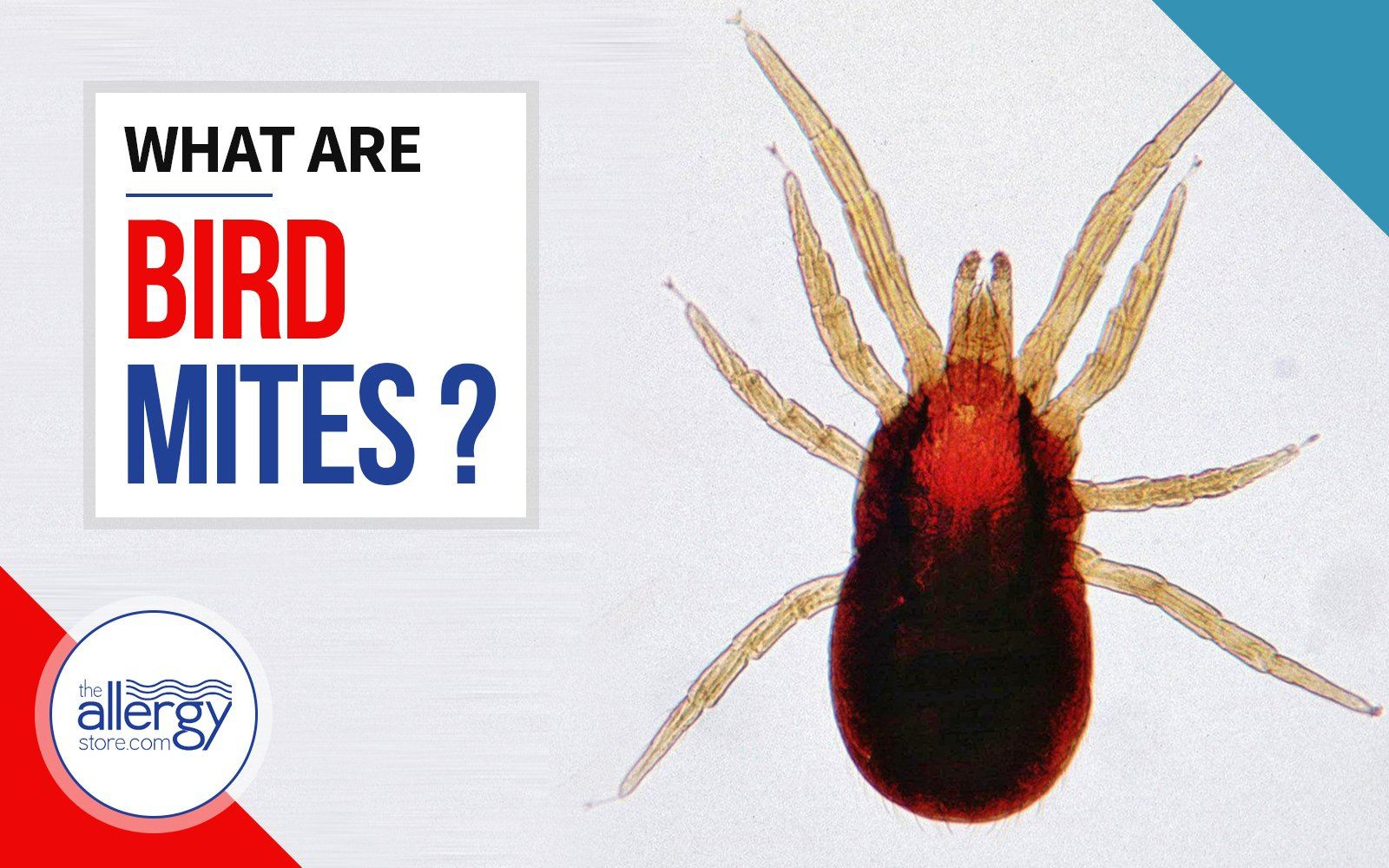 Bird Mites | What Exactly are They?