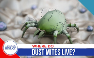 Where Do Dust Mites Live?