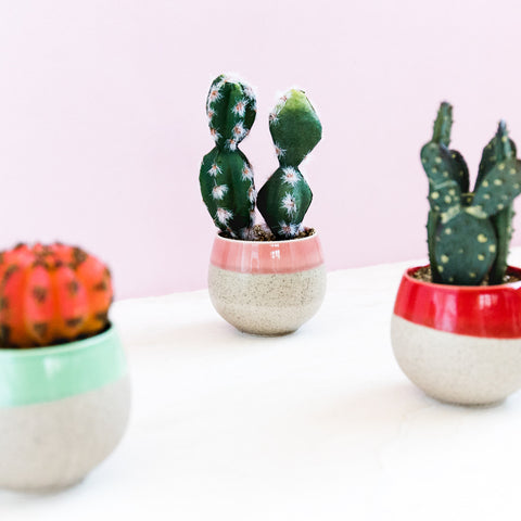 Cactus With Pink Pot