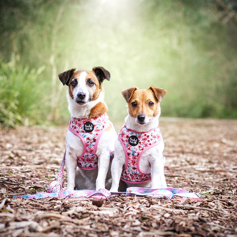 Two dogs wearing Pick of the Bunch reversible harnesses