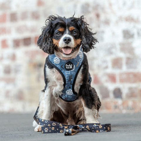 Pawfect Pals Cavalier Wearing I Love You BEARy Much Reversible Dog Harness