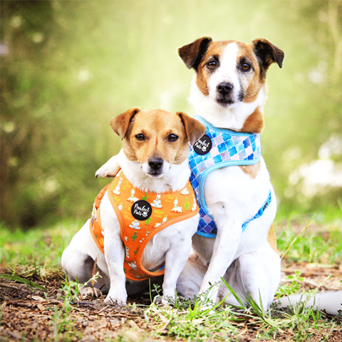 Pawfect Pals Don't Quit Your Daydream Reversible Dog Harness
