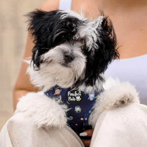 Pawfect Pals Maltese Shih Tzu in Infinity & Beyond Reversible Harness