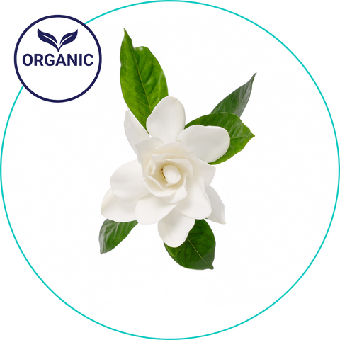 organic gardenia - tubbubble ingredient