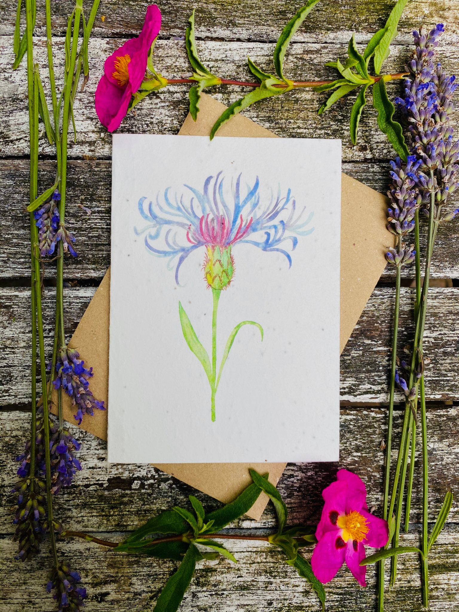 Plantable Flower Card - Centaurea Flower