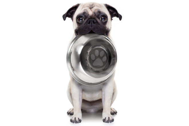 picture of cute pug dog with empty food bowl