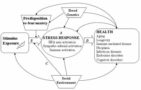 Schematic model of Interactions between Fear and Anxiety, Genetics, Social Environment and Stress Response in Relation to Canine Health