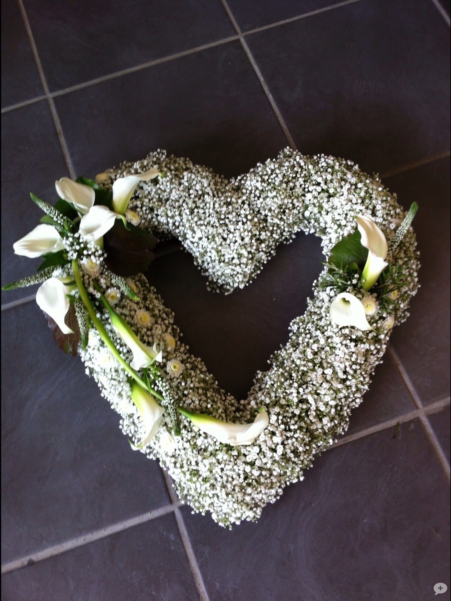 Gypsophila Open Heart