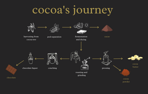 The difference between cacao, cocoa, and chocolate: a cocoa bean's journey