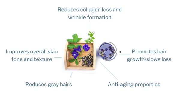 Infographic of butterfly pea tea, pea tea plant and the benefits