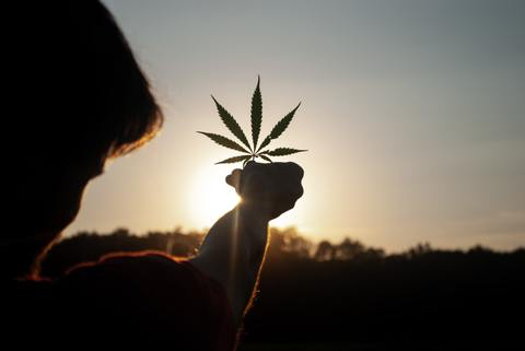 Young man in his 20s darkened by the sunset holding green cannabis fan leaf in front of the gorgeous sunset after consuming cannabis edibles for sleep
