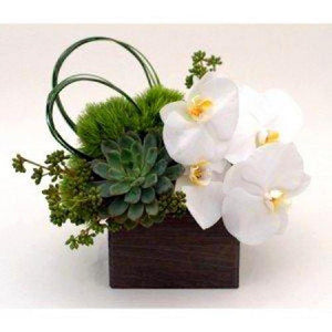 Elegant Orchids and Succulents