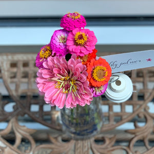 French Zinnia
