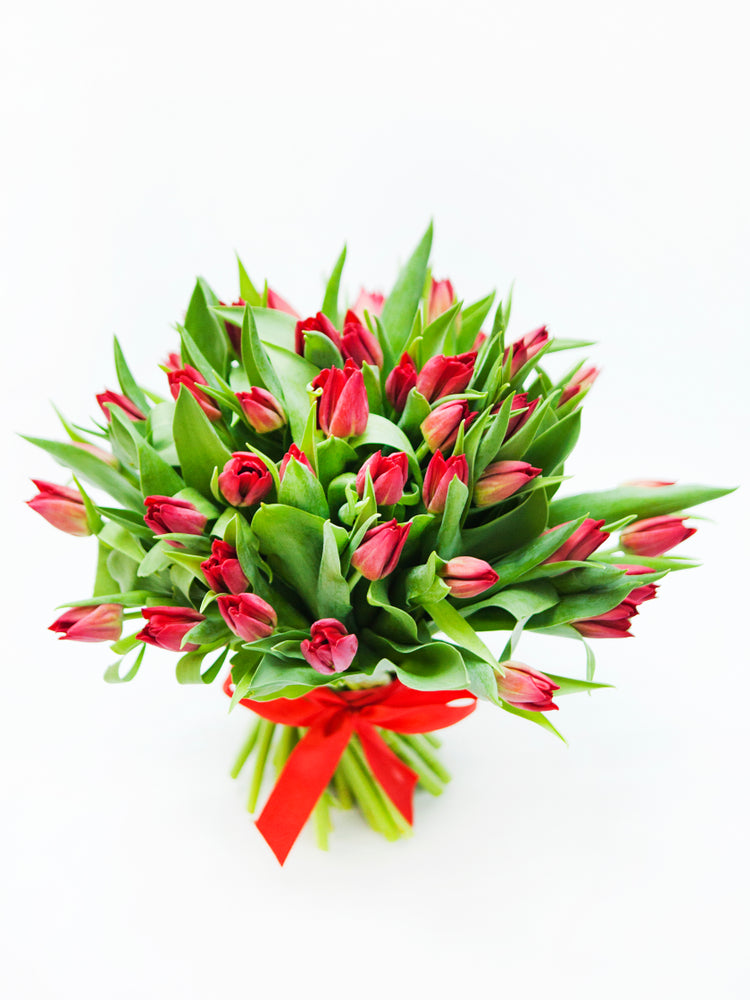 Lily Palmer Red Tulips (2 Dozen)