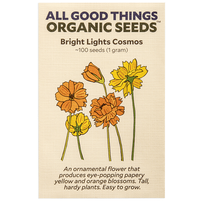Bright Lights Cosmos Flower
