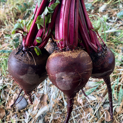 Shiraz Tall Top Beet