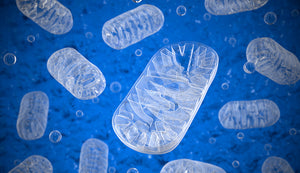 All About Mitochondria Function & Related Diseases