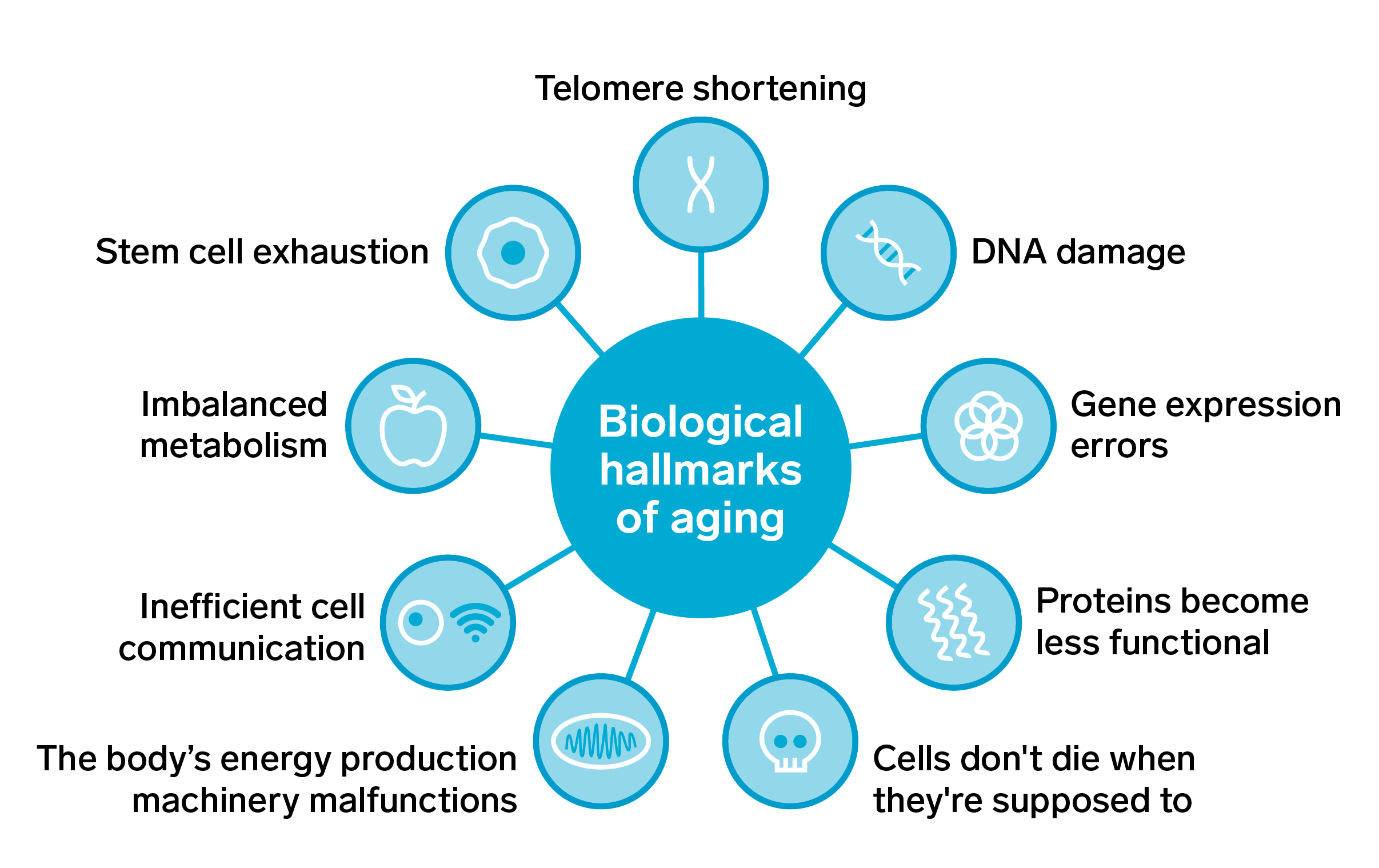 Hallmarks of Ageing