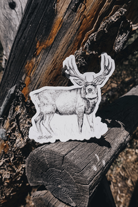 Mule Deer Sticker