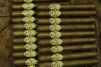 MARCUS DANIEL® <br> HABANO <br> Miami Collection