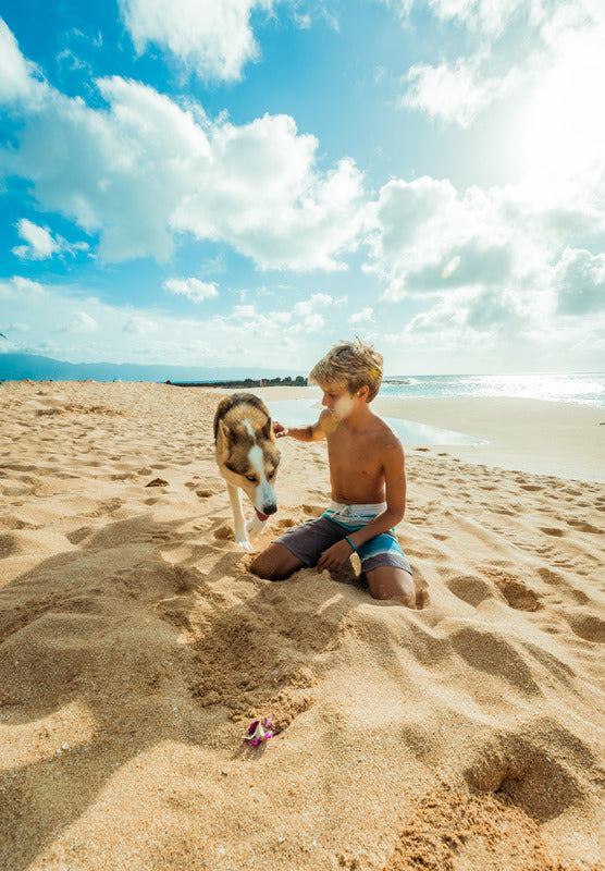 How to Have Happy Days Out with Your Dog