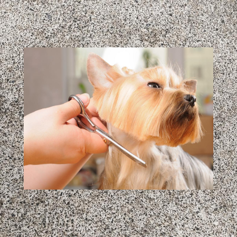 The Art Of Dog Grooming!