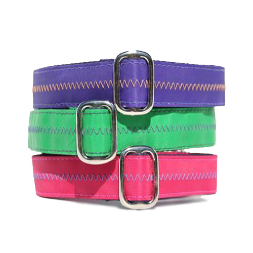 Sailcloth Buckle Collar