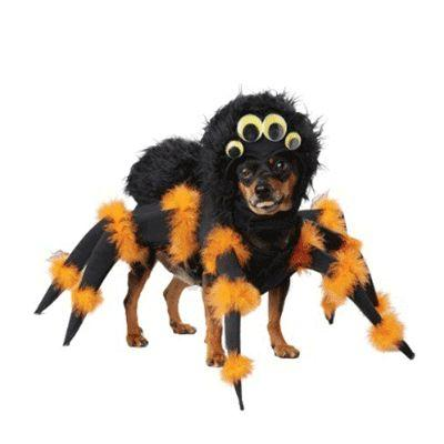 Spider Pup Pet Costume