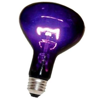 Blacklight  100 Watt Bulb
