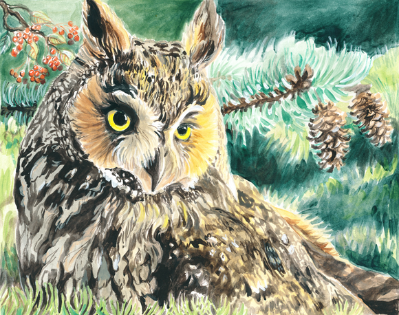 Long-Eared Owl (Qty. 6)