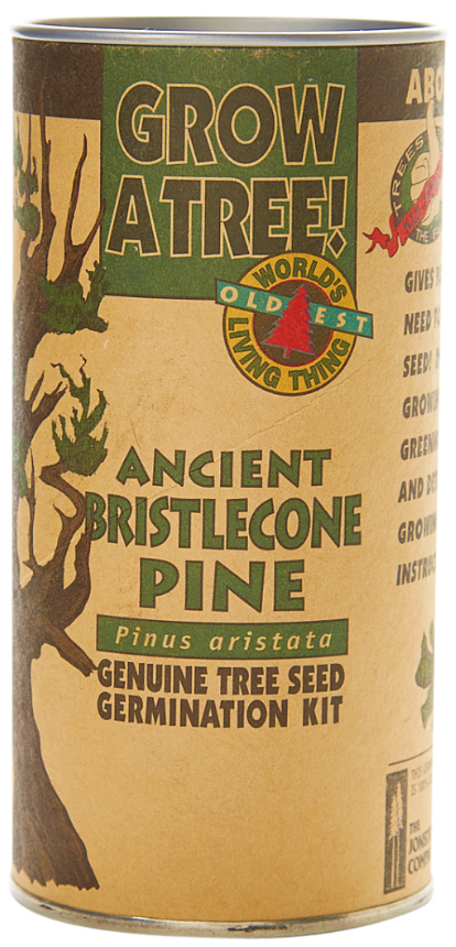 Bristlecone Pine Seed Grow Kit (Qty. 6)