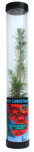 Living Christmas Tree (Norway Spruce) (Qty. 6)