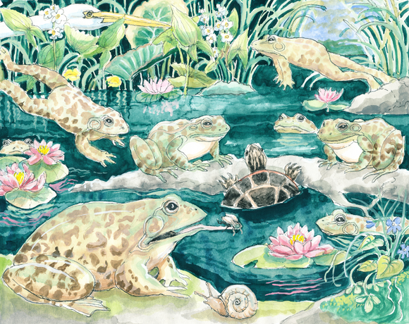 The Giant Frog Pond (Qty. 6)