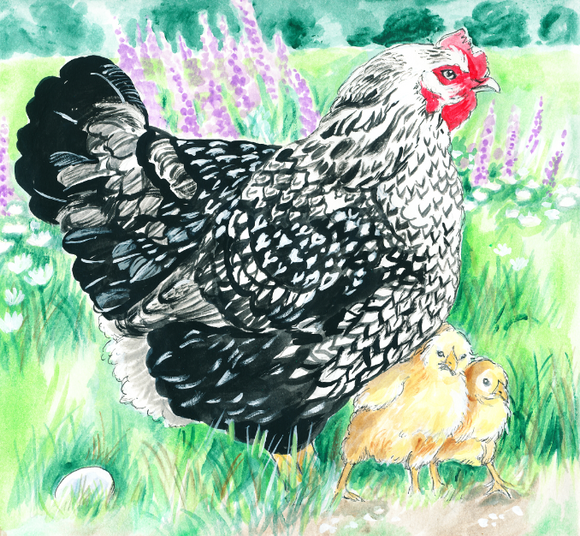 Wynona the Attack Chicken (Qty. 6)