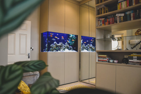 A fish tank in an at home office / study