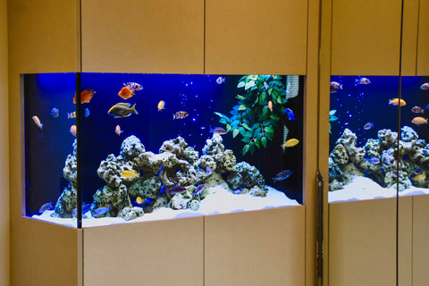 Close up of a fish tank in an at home office / study
