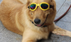 Pet / Dog Sunglasses With Adjustable Straps - TrendiaStore