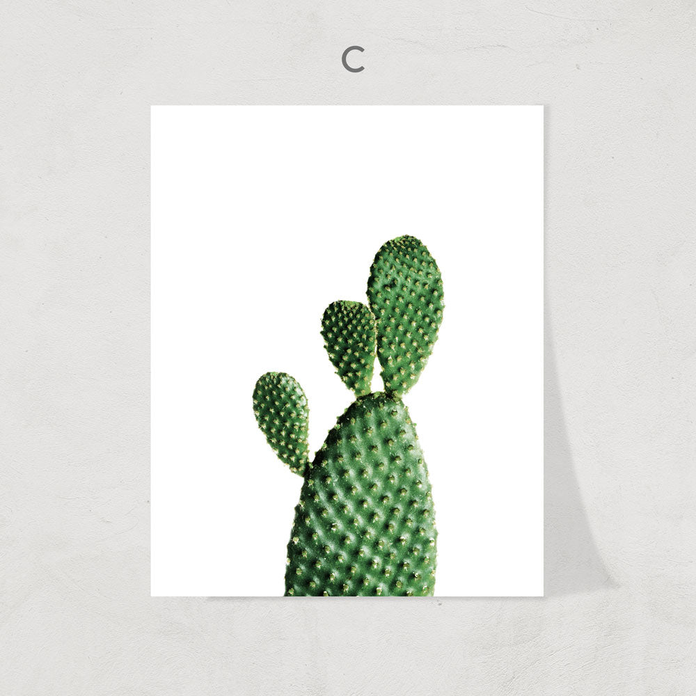 Cactus Collection Print