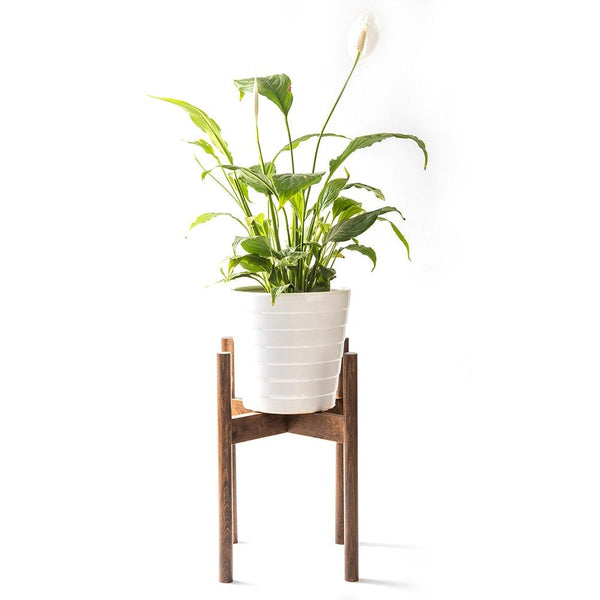 Cross Beach Wood Planter Stand