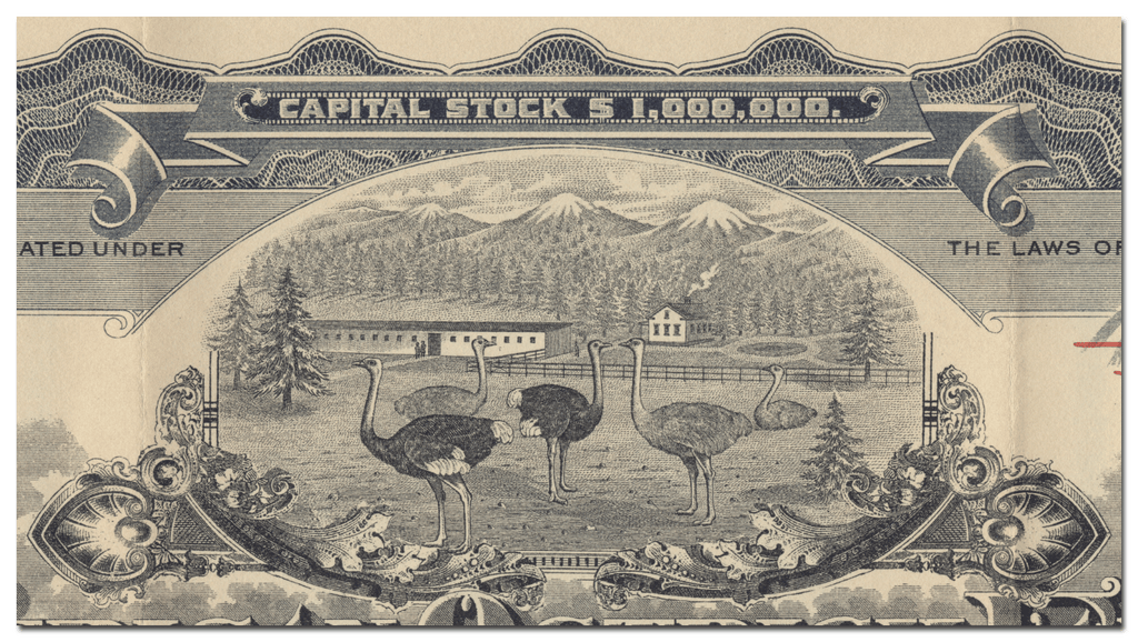 African Ostrich Farm and Feather Company Stock Certificate