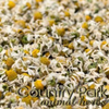 Country Park Chamomile Flowers