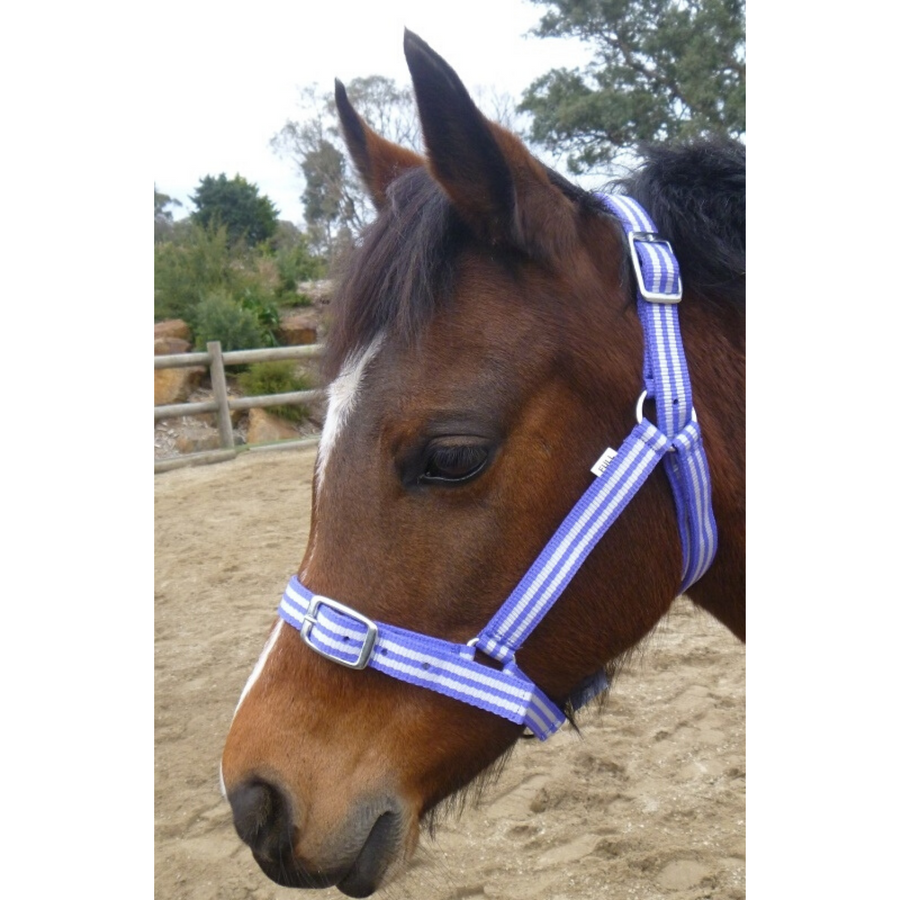 Buzz Economy Nylon Headstall