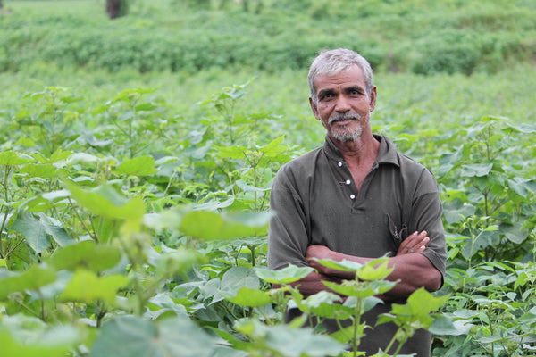 Farmers growing organic cotton