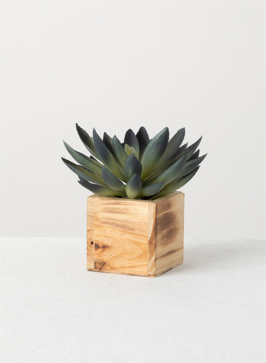 Succulent in Box