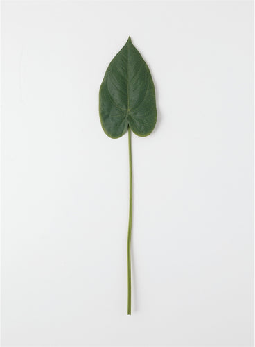 Anthurium Leaf Stem
