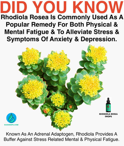 rhodiola rosea is used as a remedy for fatigue