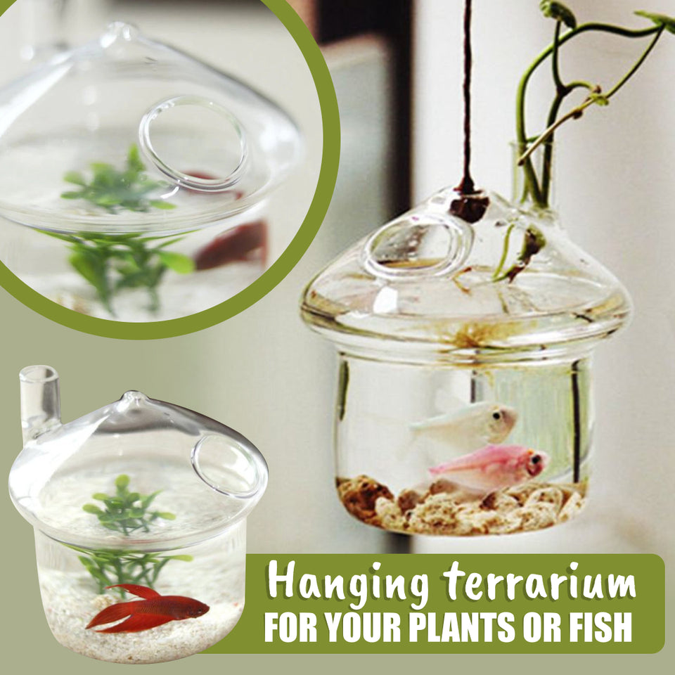 TimelessDecor Hanging Glass Terrarium